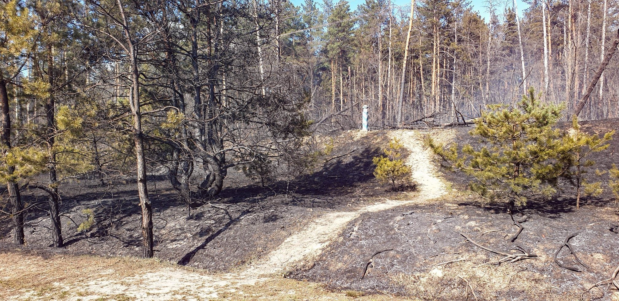 "Path to Burned Summer Camp ""Emerald"" (photo - Alexandr Sirota / pripyat.com)"